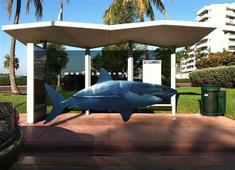 "Shark Takes Miami Beach Trolley, Says Beach Water ""Too Poopy"" To Swim"
