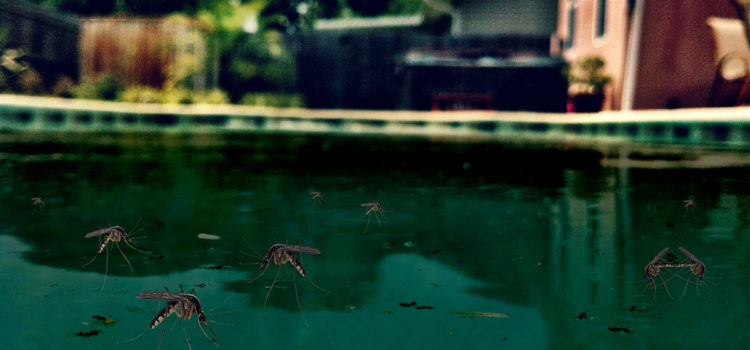 Homestead Man Vows to Clean His Zika-Infested Swimming Pool Someday