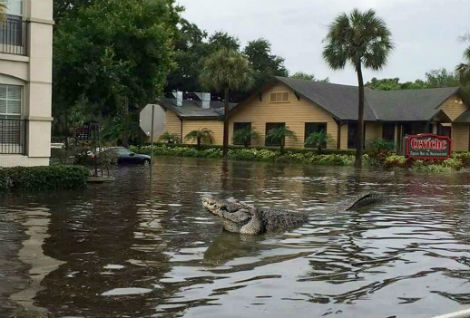 Governor Rick Scott To Address Sea Level Rise For Richest Residents