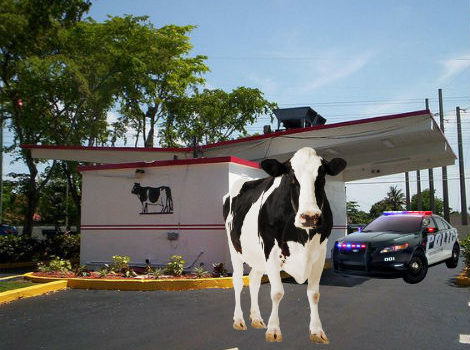 Escaped Cow Arrested After Robbing Farm Stores