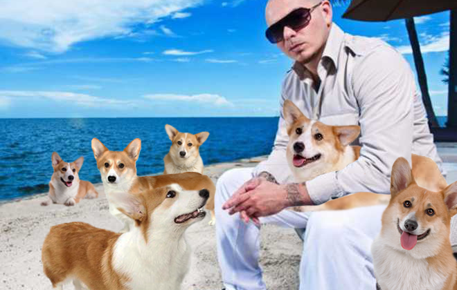 Pitbull Secretly Prefers Corgis