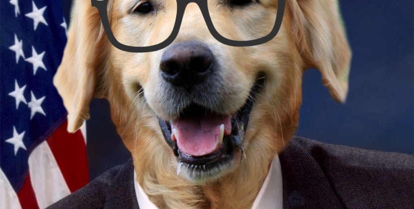 Nowhere in the Constitution Does it Say a Dog Can't Run for Senate: My Review of Airbud 14: The Endless Fillibarker