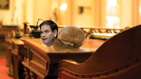 Scientists Designate Marco Rubio An Actual Invertebrate
