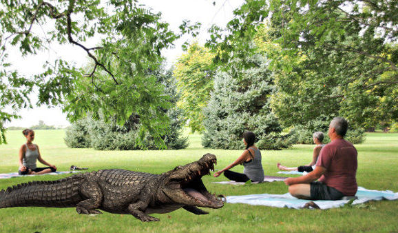 Forget Goat Yoga, Alligator Yoga Is Miami's Next Hottest Fitness Trend